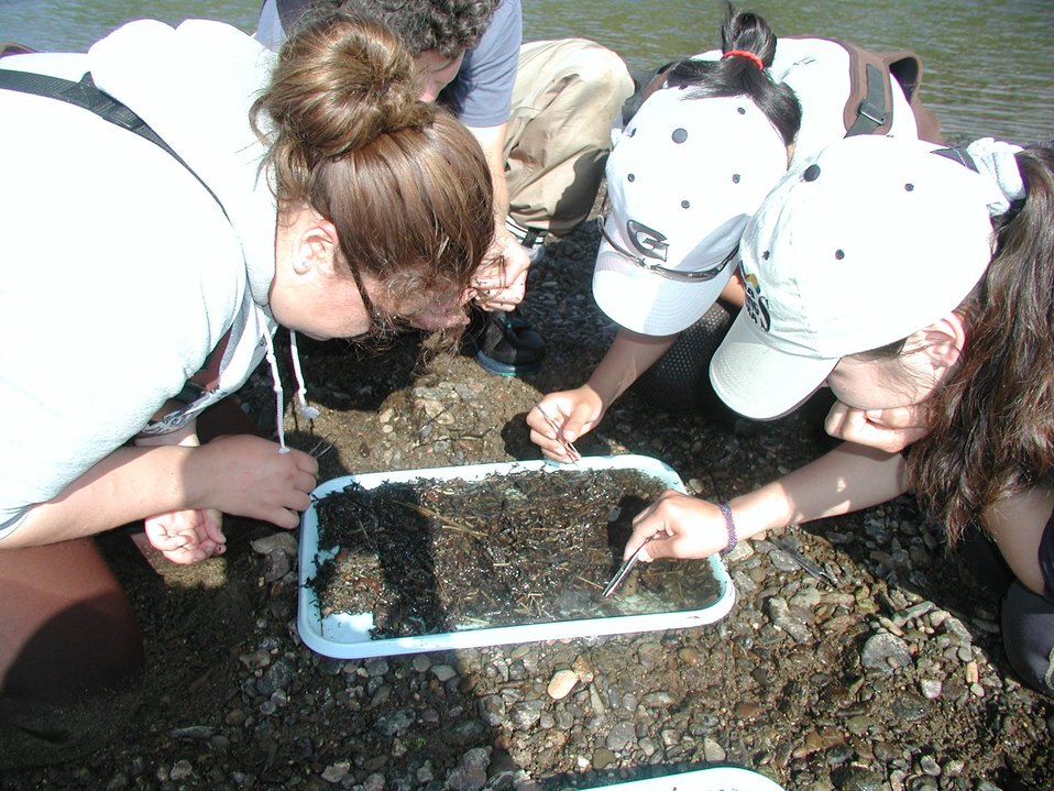 Students Inventoring Aquatic Insects
