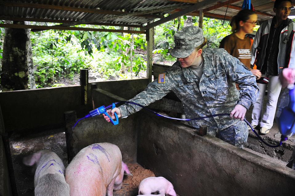 Capt. North Applies De-worming Medicine Onto the Backs of Pigs