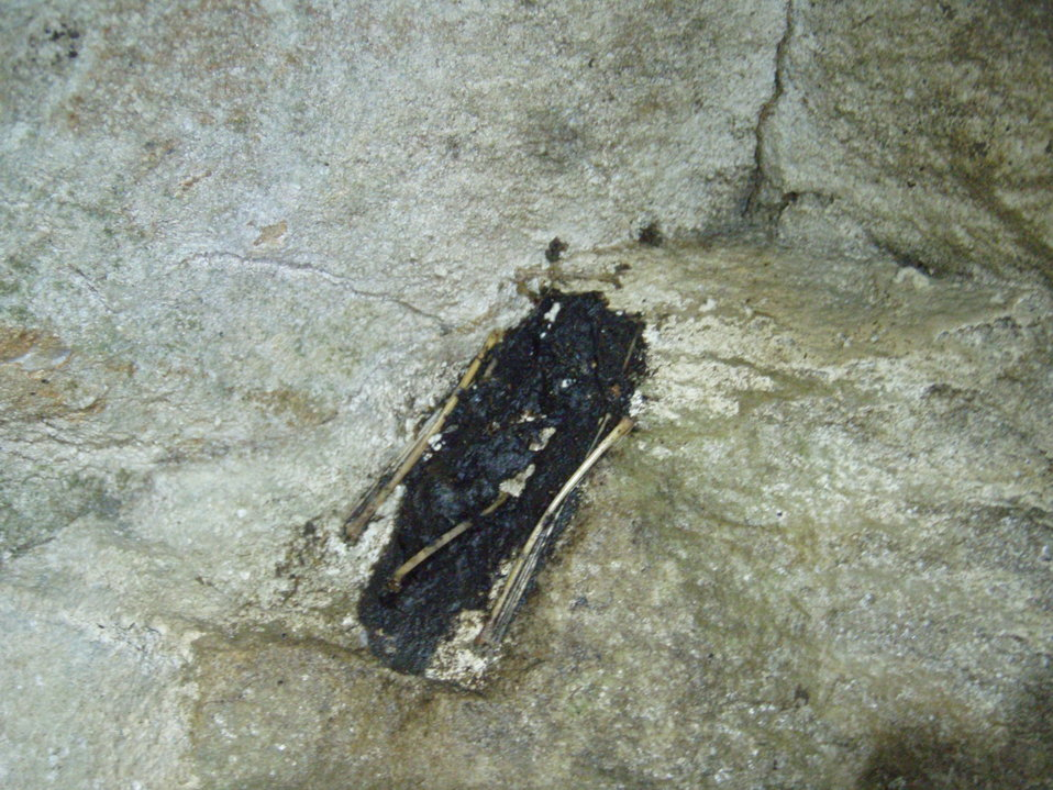 A bat carcass clings to the wall in Aeolus Cave