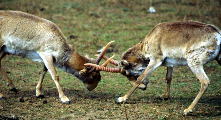 Saiga Fight 3
