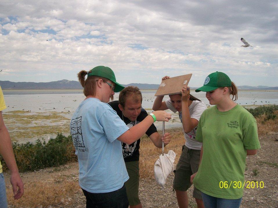 Weighing Gulls at Bear River Migratory Bird Refuge