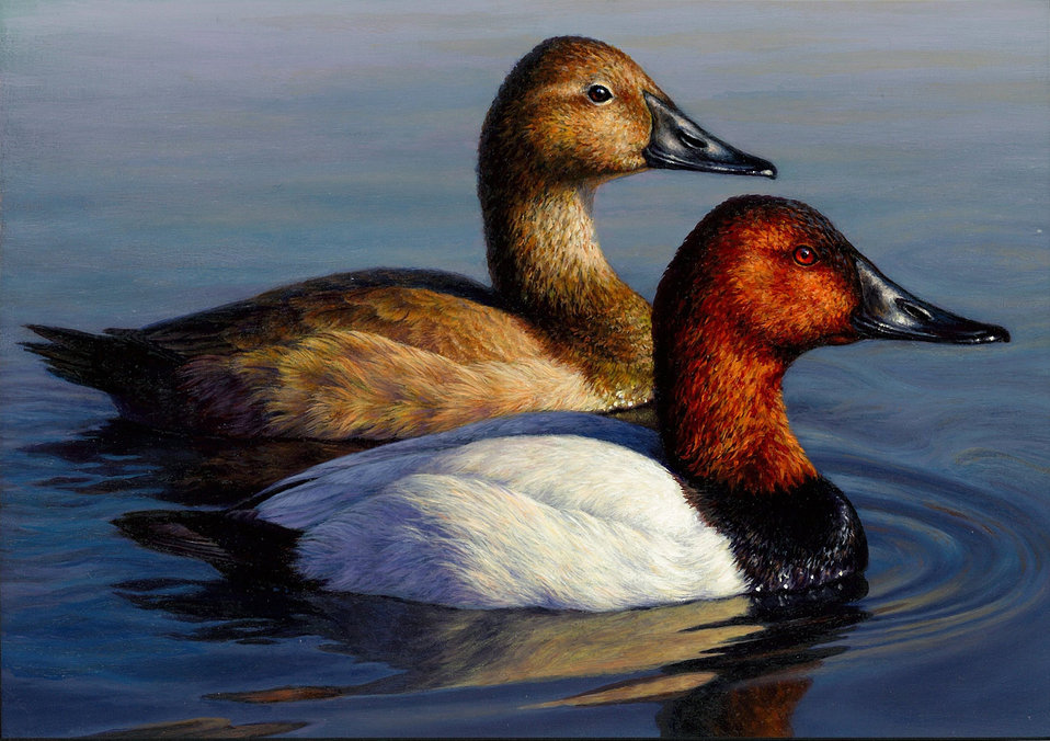 2013 Duck Stamp Contest Submission 199