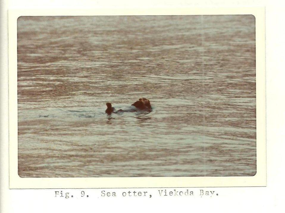 (1975) Sea Otter