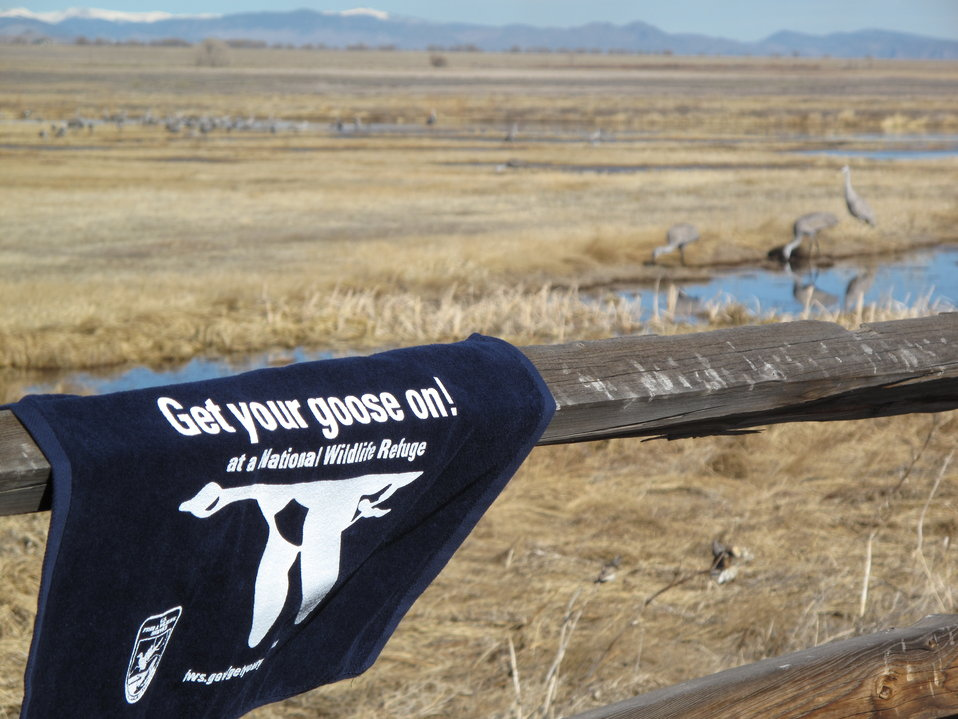 Get Your Goose On! at Monte Vista NWR
