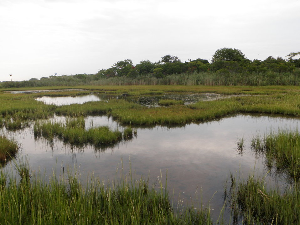 Lido Beach Wetlands