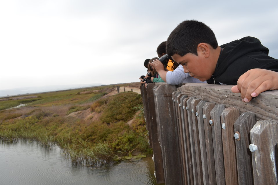 Looking for creatures in the marsh
