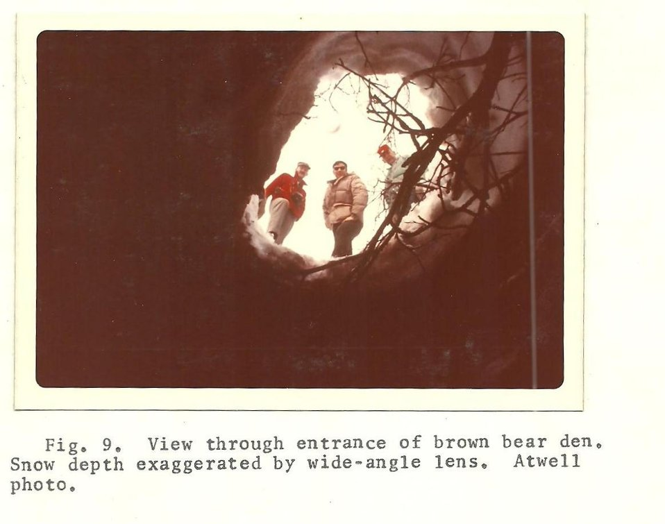 (1974) Brown Bear Den
