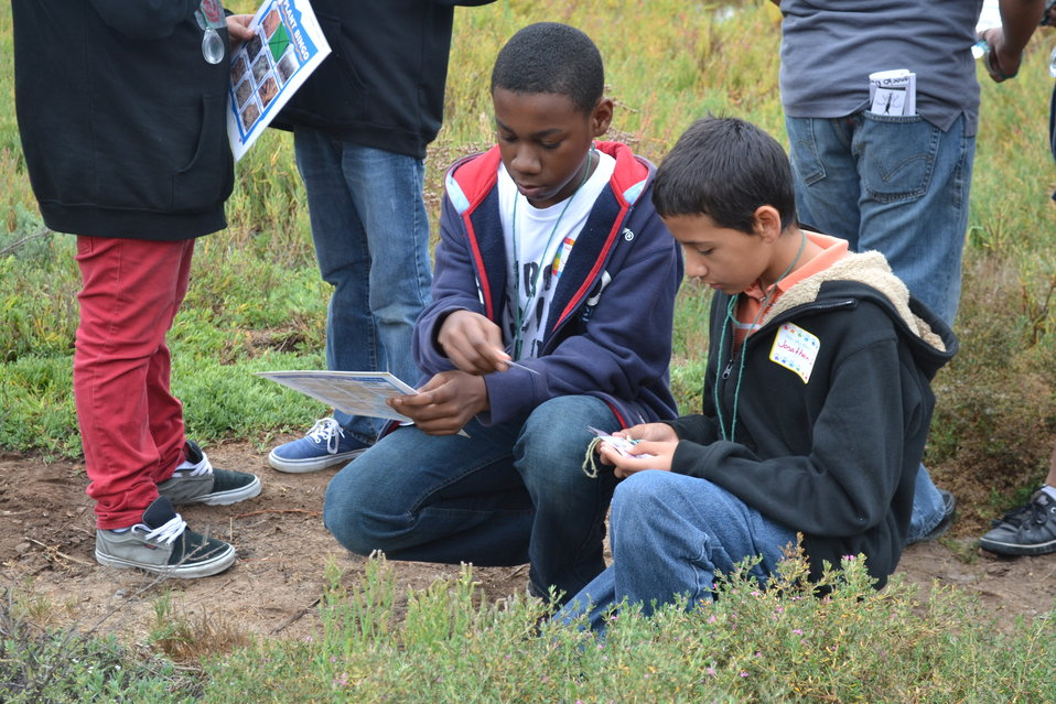 Discussing the differences in salt marsh plants