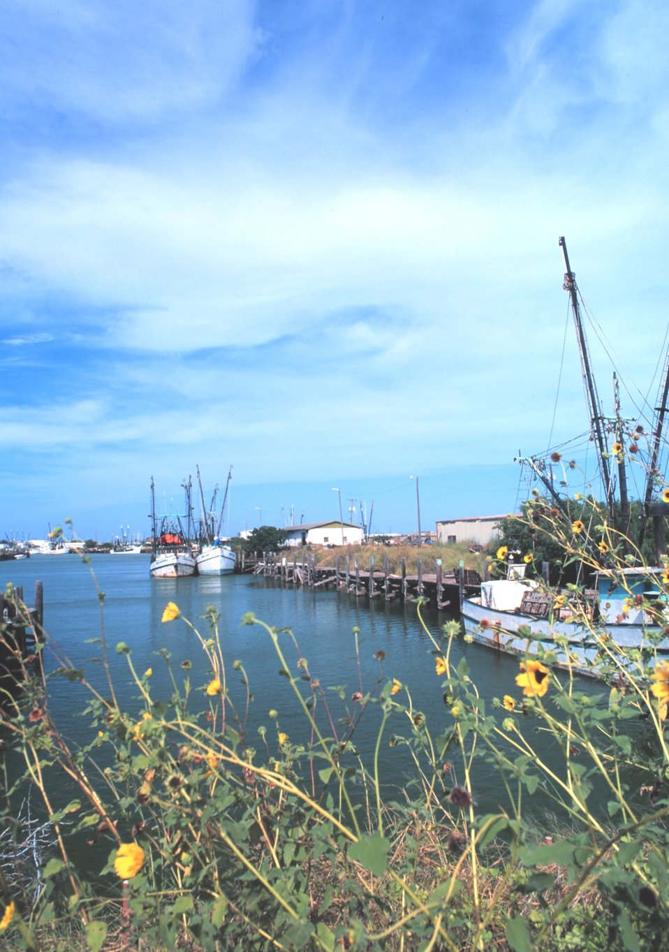 Shrimp boats and sunflowers