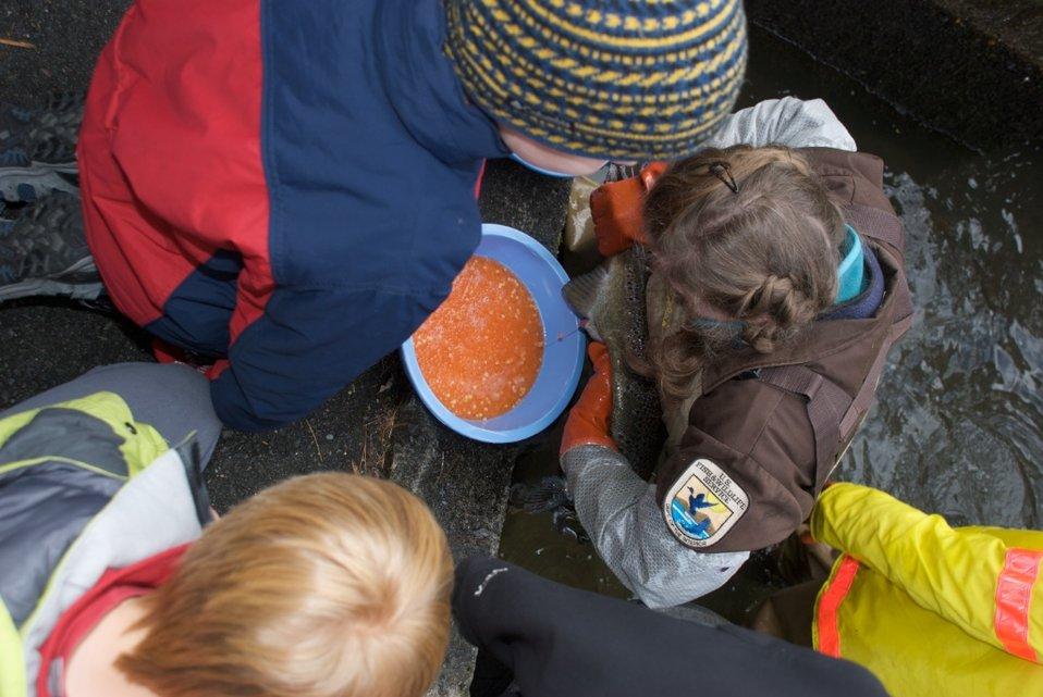 Richard Cronin National Salmon Station