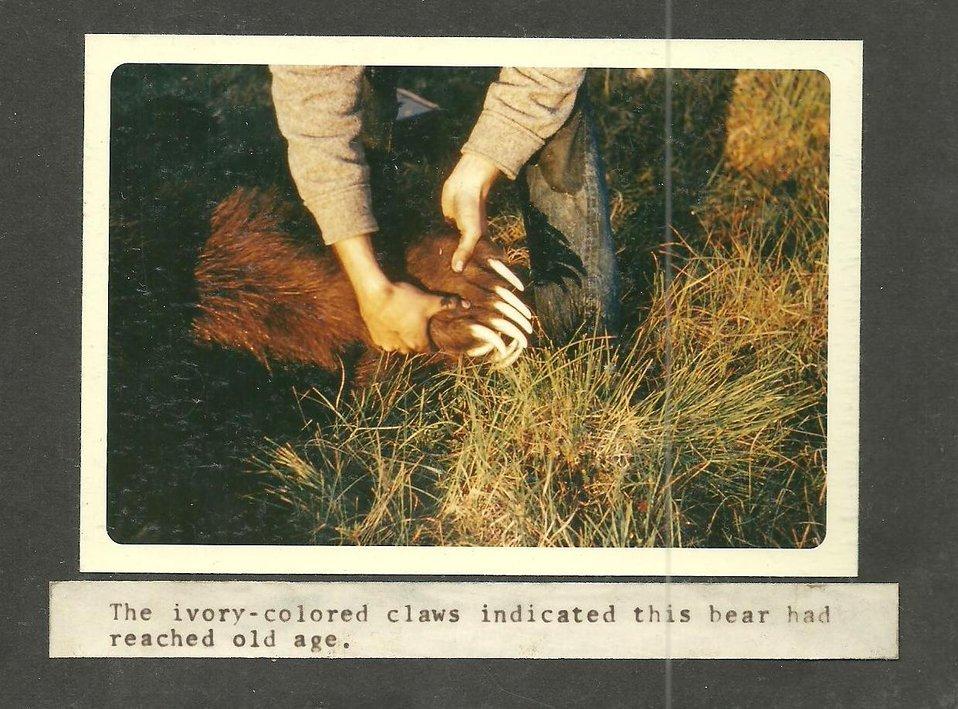 (1969) Ivory Nails