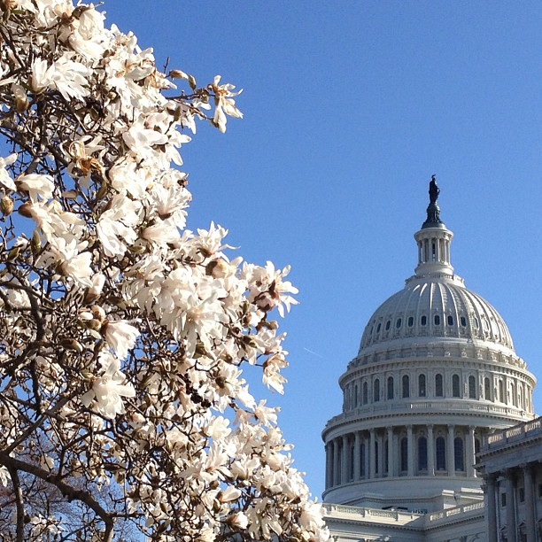 Blooms and blue skies at the Capitol today.