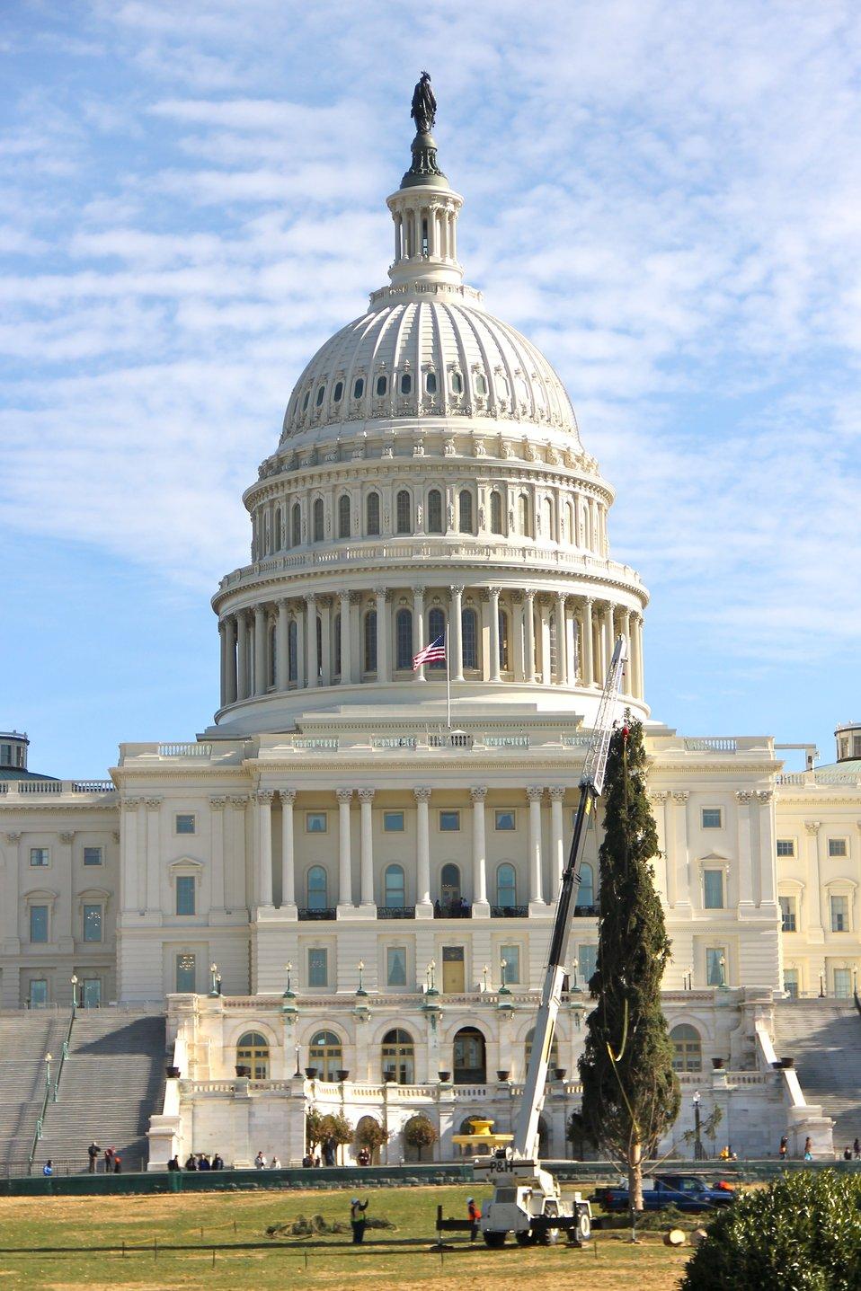 Capitol Christmas Tree 2013
