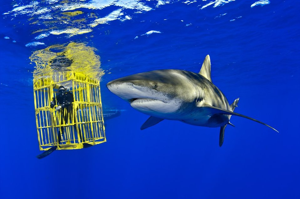 #20 - U.S. Supports Shark & Ray Proposals