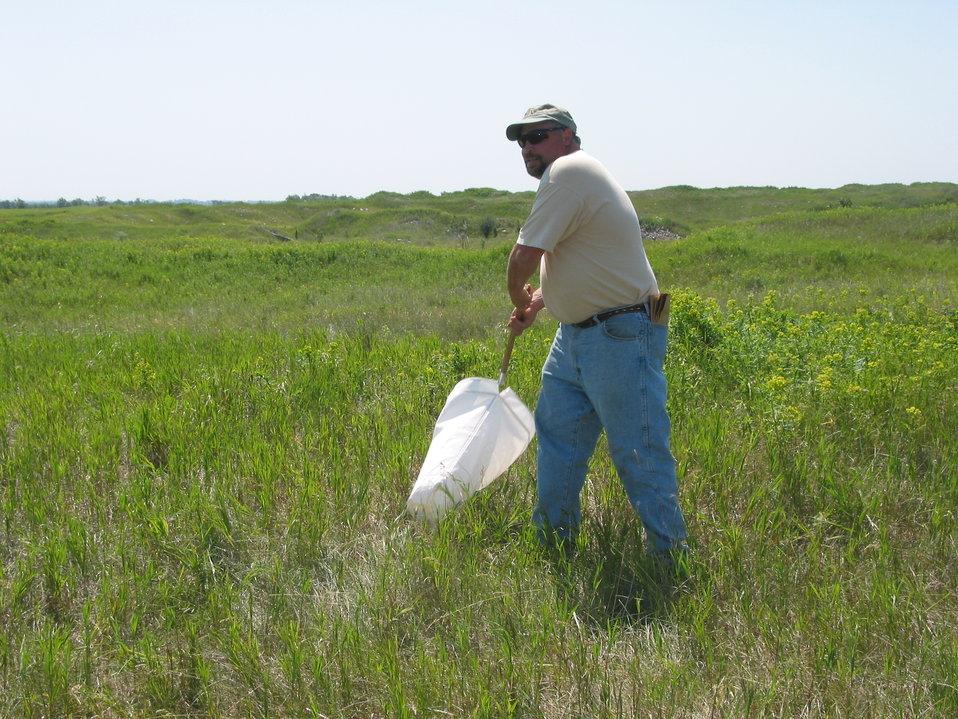Collecting Flea Beetles