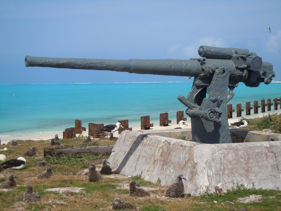 albatross nests & WW II gun emplacement