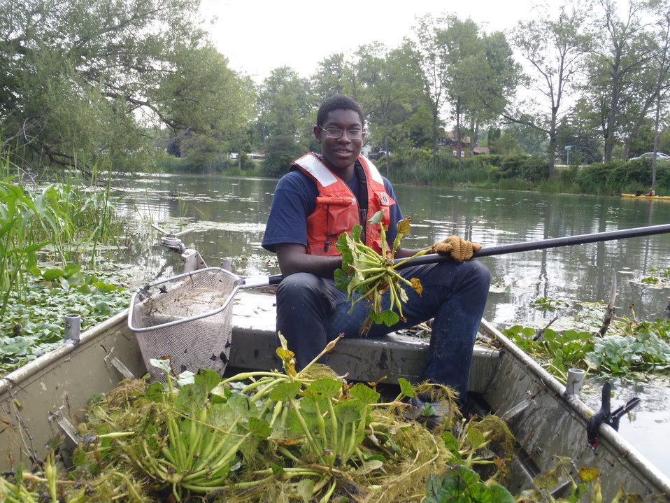 Water Chestnut Volunteer