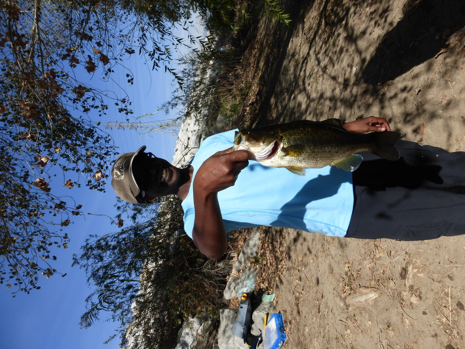 Non native large mouth bass