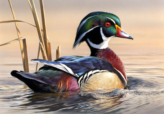 Duck Stamp - Winner, 2011