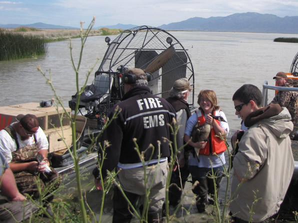 Airboats for Canada Goose banding project
