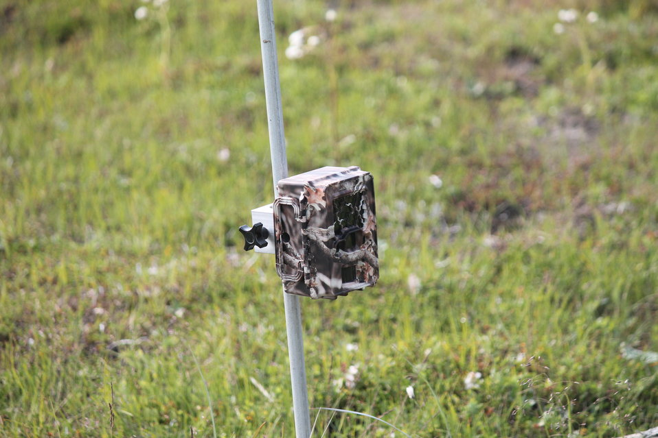 Using Trail Cameras - Say Cheese