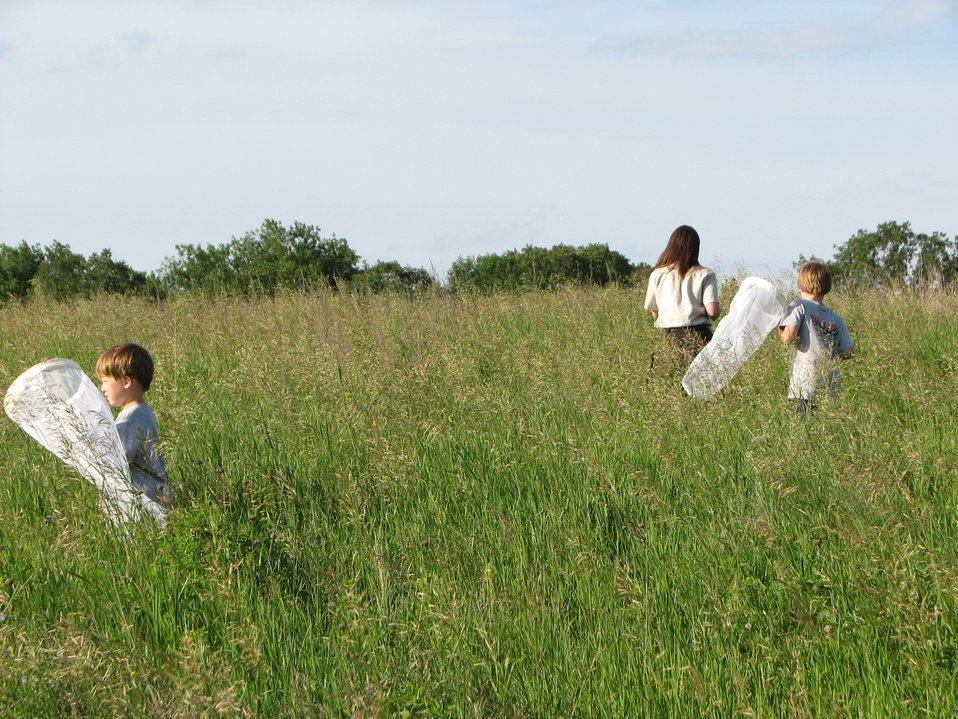 Youth Seeking Pollinators