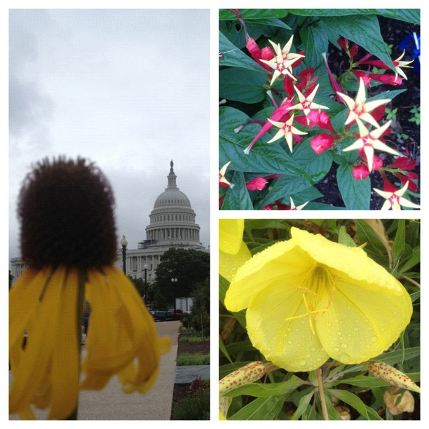 Plants enjoying rainy days in #dc at the US Botanic Garden.