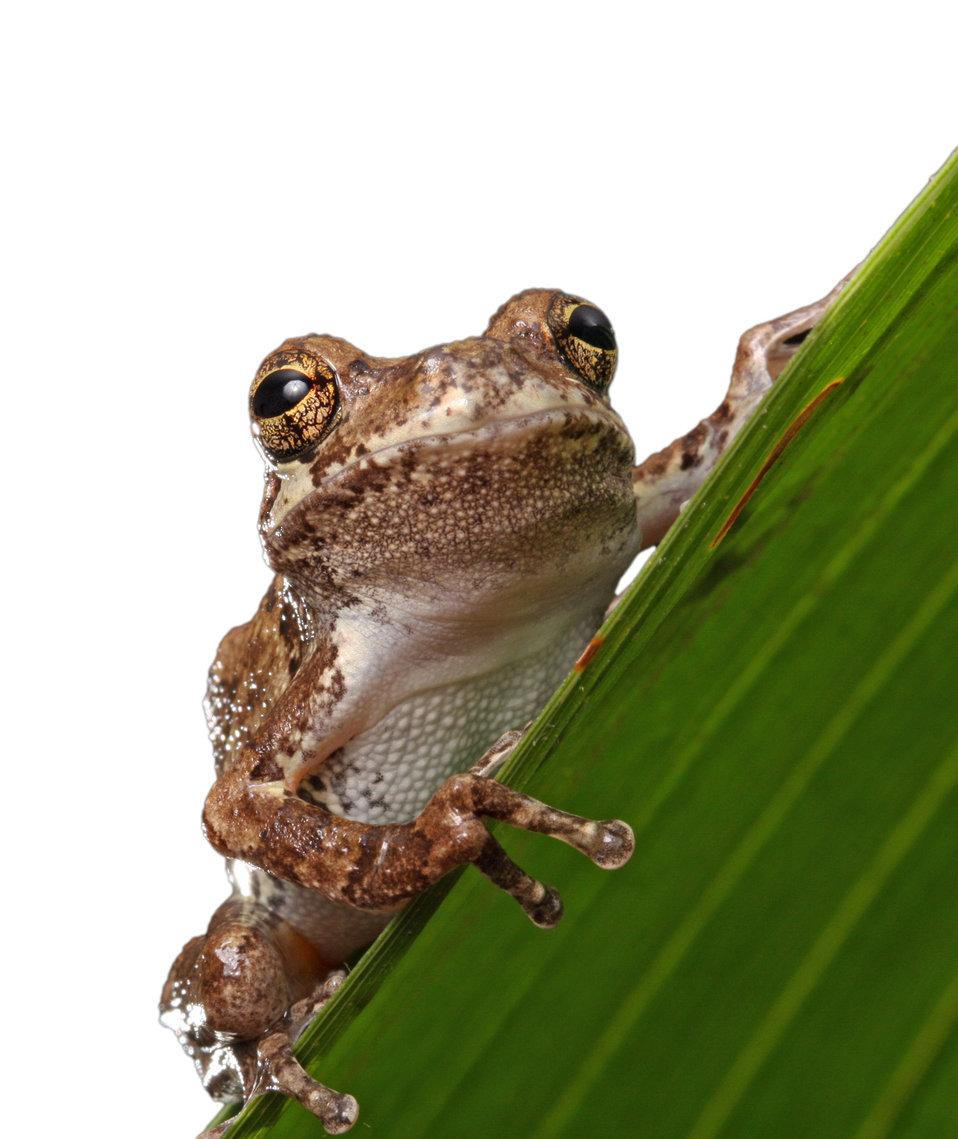 Frog isolated macro
