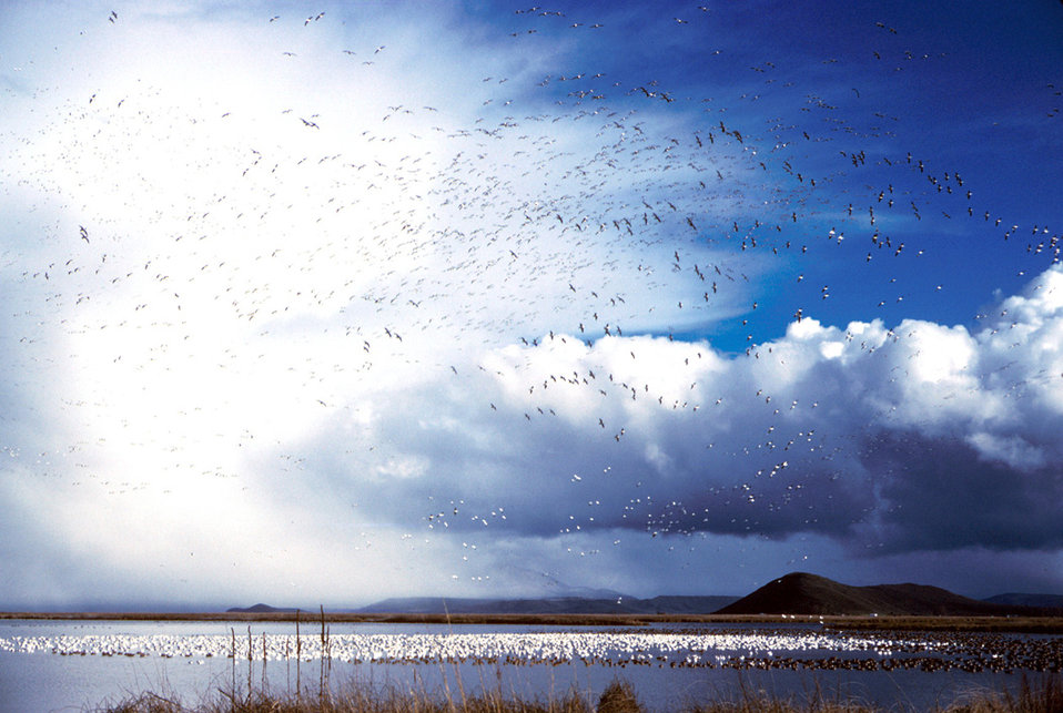 clouds and birds, Lower Klamath Refuge