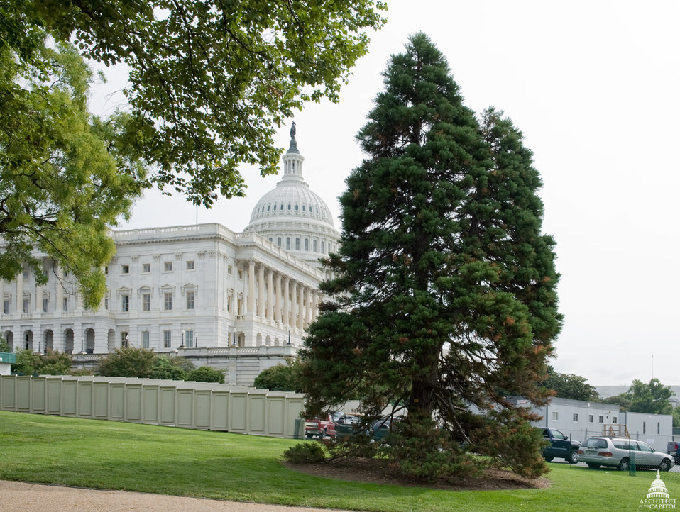 Giant Sequoia on the U.S. Capitol Grounds