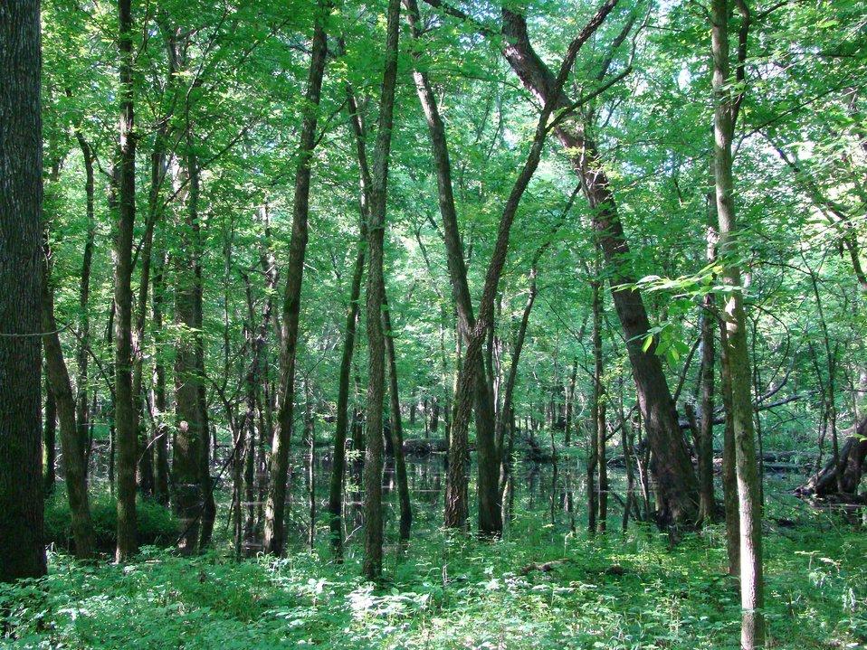 Marais des Cygnes National Wildlife Refuge