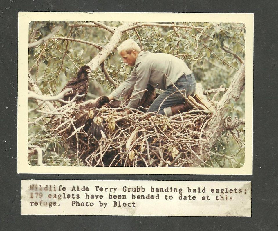 (1968) Banding Bald Eaglets