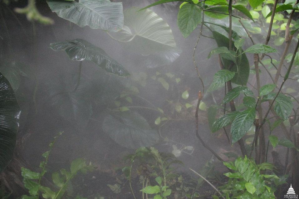 Jungle Room Mist at US Botanic Garden