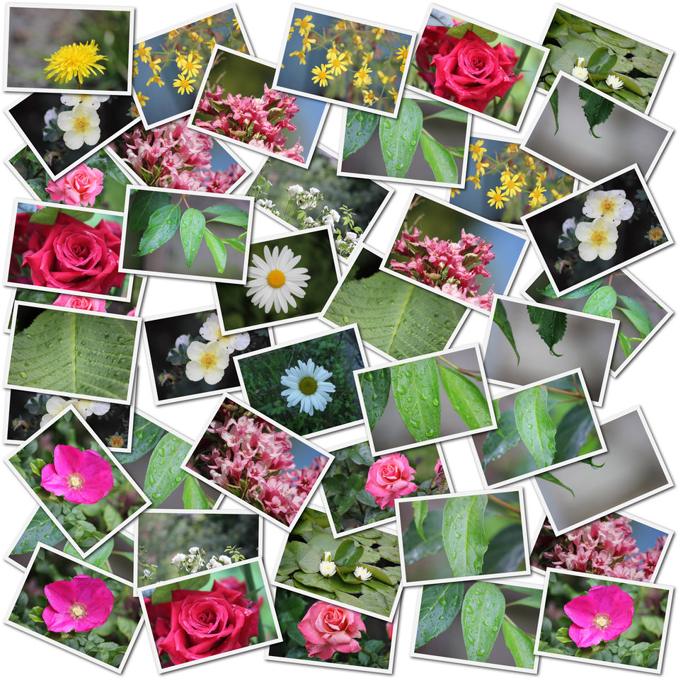 Flower and leaf - photo collage