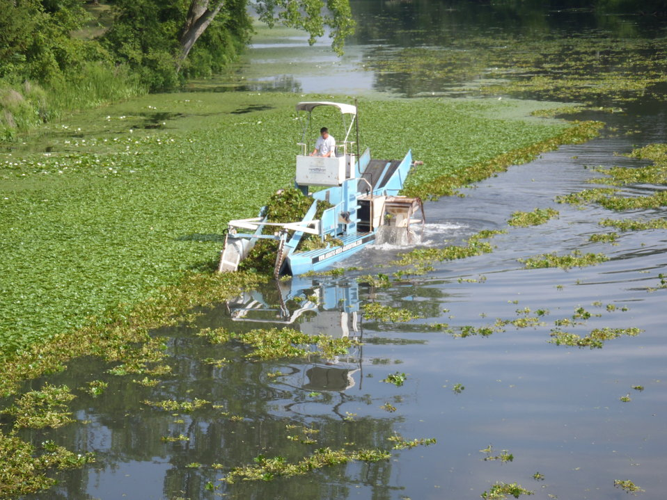 Water Chestnut Mechanical Harvesting in 2011