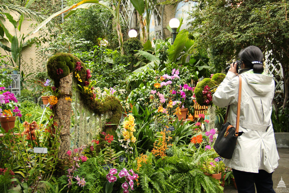 Orchid Symphony exhibit at the U.S. Botanic Garden