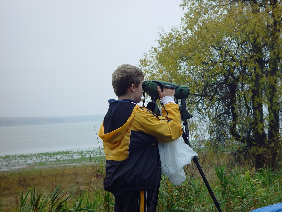 Young Bird Watcher