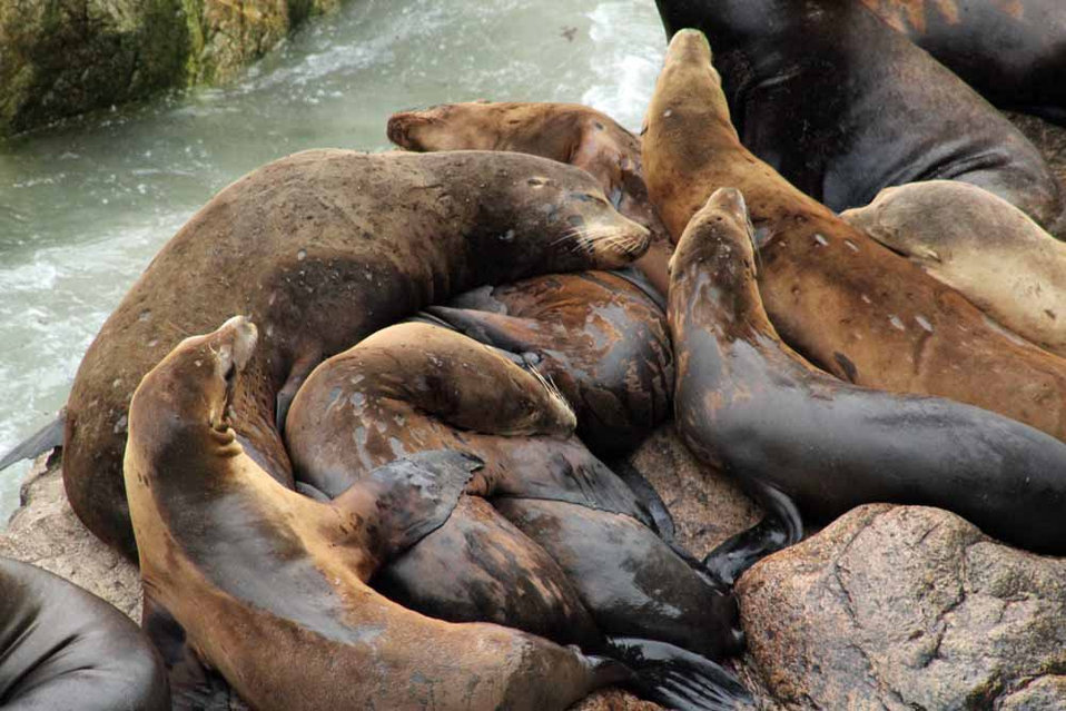 sea lion nursery