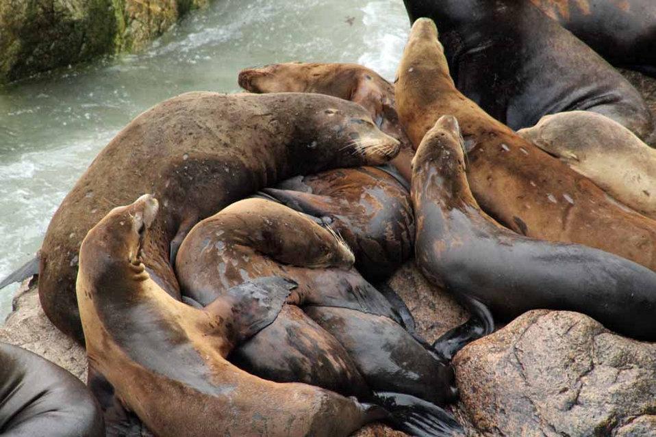 sea lion nursery