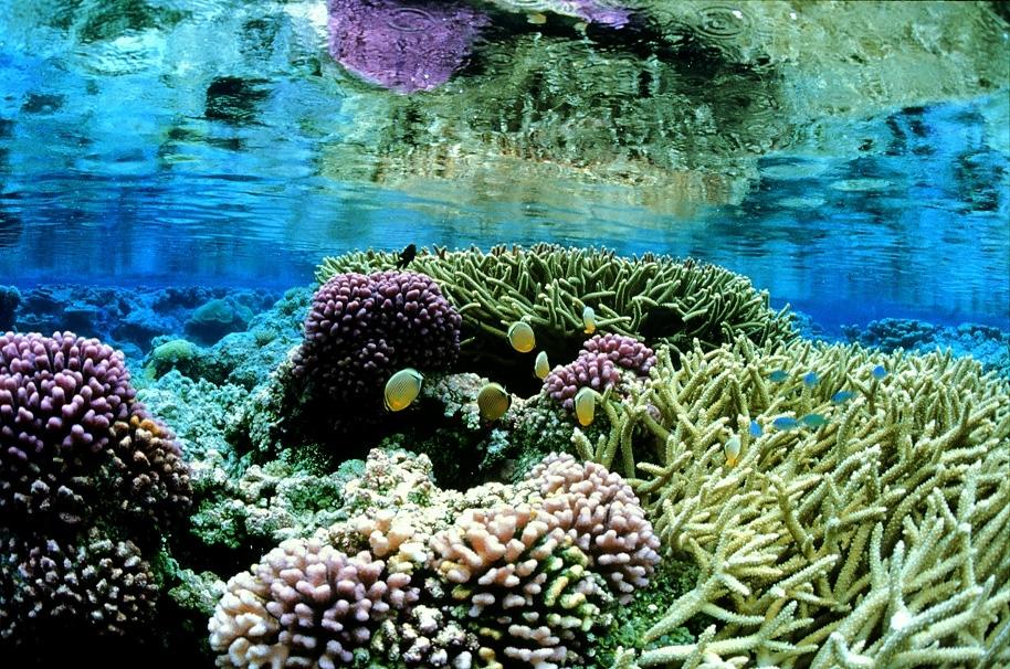 Coral gardens at Palmyra Atoll NWR