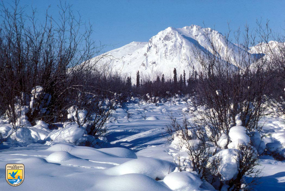 Arctic National Wildlife Refuge - winter scene
