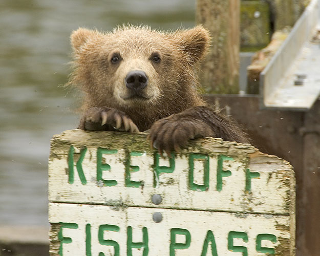 Bearsof Kodiak Refuge
