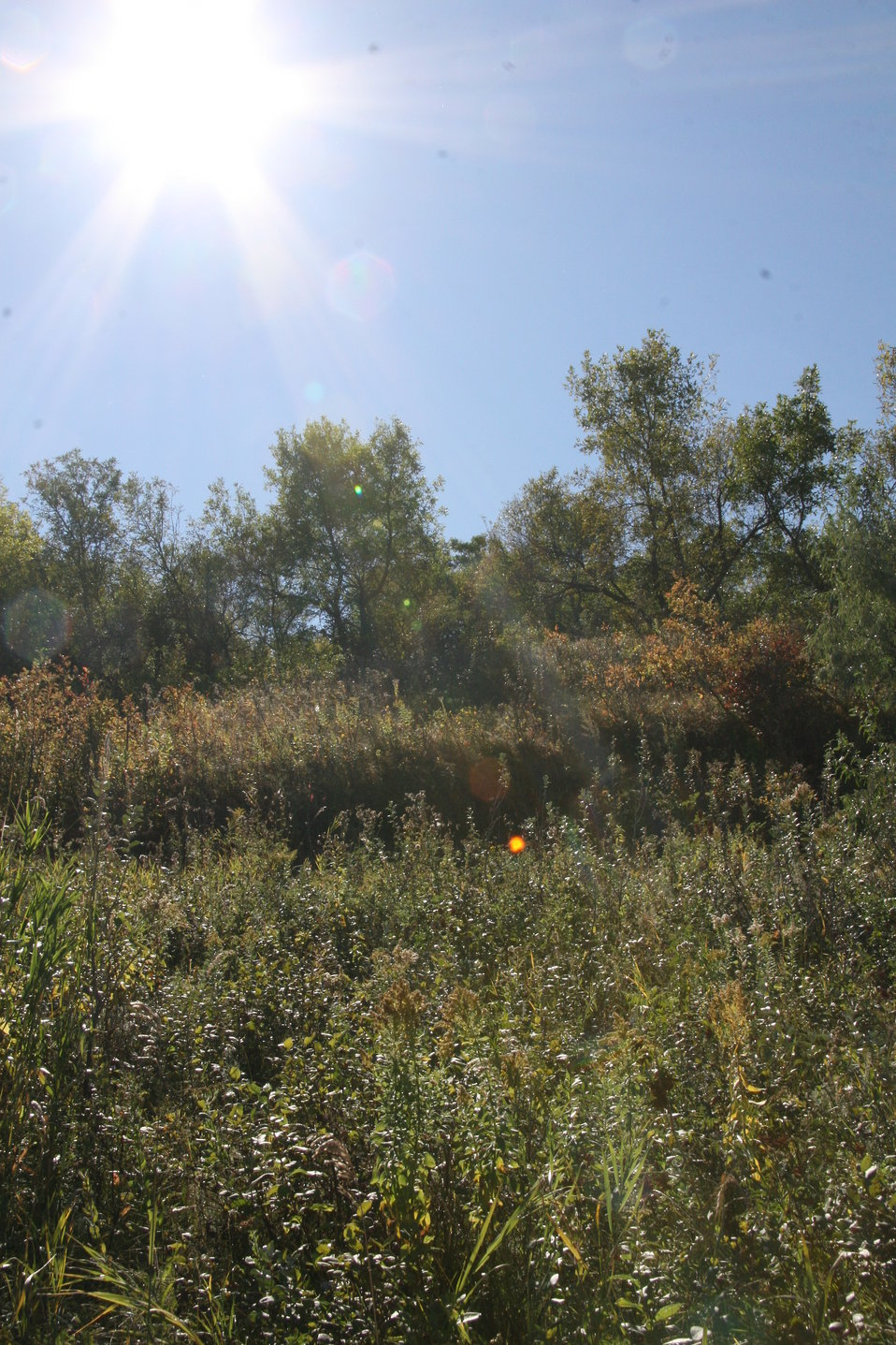 Fall Day - Fall Colors, Scenery & Wildlife on Des Lacs Refuge
