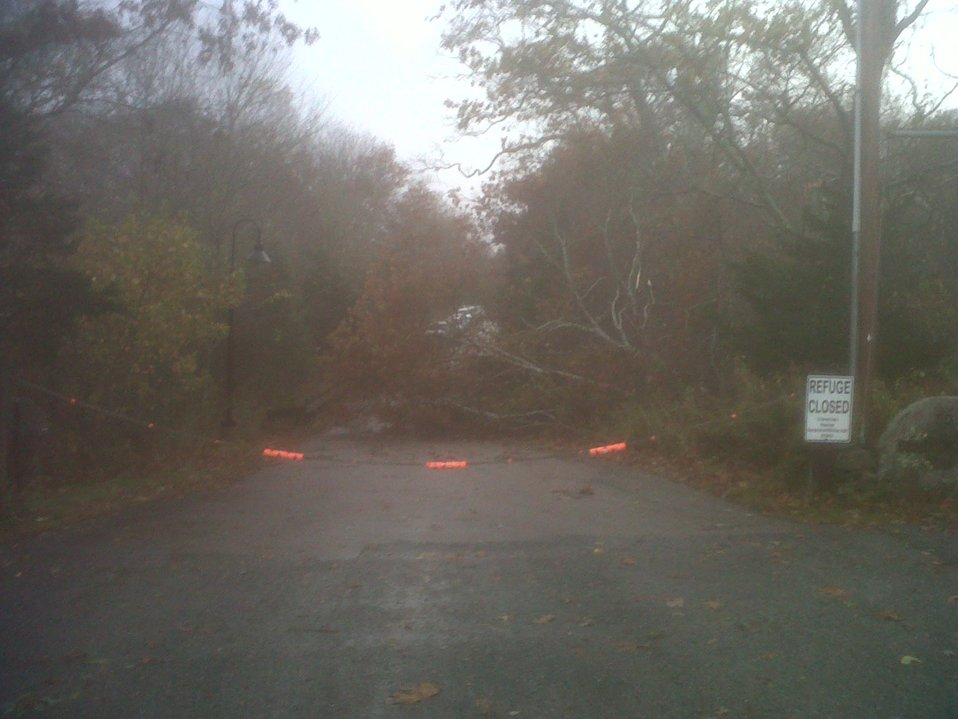 Downed tree at Rhode Island