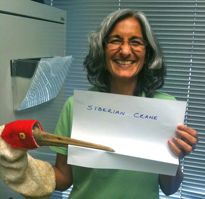 Mini Nagendran, 'Siberian Crane,' Credit: USFWS