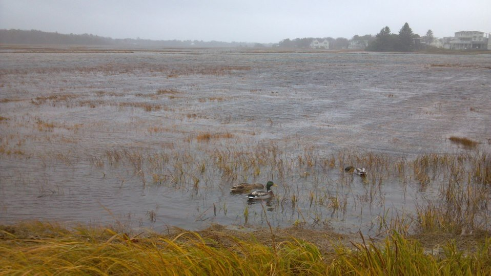 Rachel Carson National Wildlife Refuge: October 29,2012 (ME)