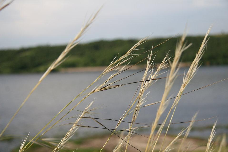 Grasses at Des Lacs National Wildlife Refuge