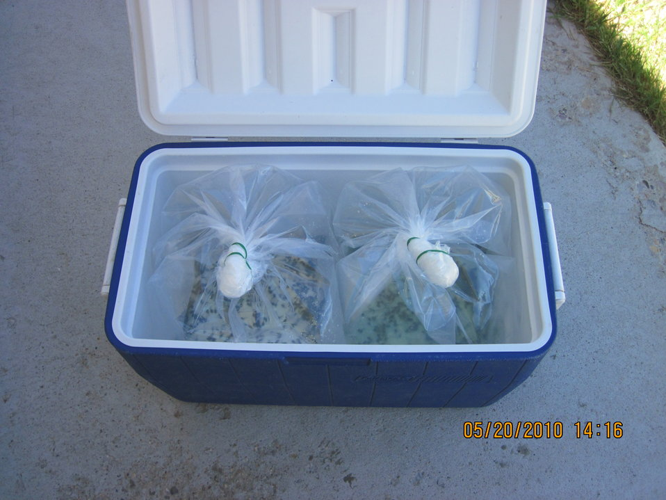 Wyoming Tadpoles Ready to Ship