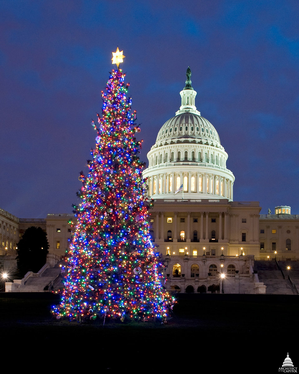 Capitol Christmas Tree - 2009