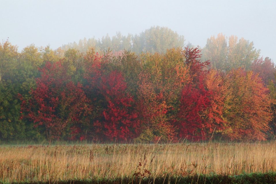 Missisquoi National Wildlife Refuge fall foliage